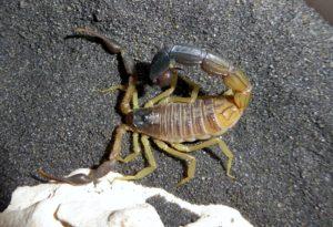 1.0 H.jayakari adult